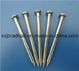Wholesale Hardware Common Round Nails Iron Nails in China