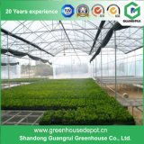 Commercial Multi-Span Film Greenhouse for Flowers and Vegetables