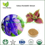 Coleus Forskohlii Root Extract Powder Supplements for Weight Loss