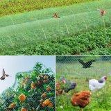 Bird Netting, Green Garden Bird Net, Reusable Anti Bird Protection Net Mesh Garden Netting Protect Seedlings Plants Flowers Fruit Trees Vegetables From Rodents