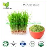 Organic Green Superfood Wheatgrass Powder Supplement