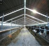 Pre-Engineer Steel Structure Low Cost Cow Farm Construction Building