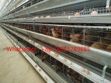 Chicken Farming Equipment Chicken Cage