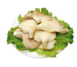 Canned Abalone Mushroom with Best Quality