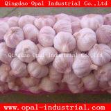Chinese Red/Normal White/Pure White Wholesale Fresh Garlic