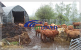 Cattle Calf Sheep Goat Livestock Tents (JIT-2326J)