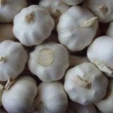 2018 Chinese Wholesale Garlic Price
