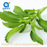 Pure Natural Stevia Leaf Extract Powder, Stevia Rebaudiana Extract-80%, 90%, 95% Stevioside