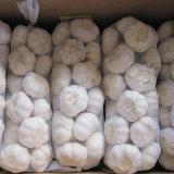 Chinese Normal White Garlic (4.5cm, 5.0cm, 5.5cm, 5.5cm, 6.0cm)