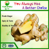 100g Organic Fresh Ginger Price for Wholesale with Good Quality