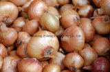 Competitive Fresh Yellow Skin Onion