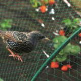 UV Treated Bird Netting, Anti Bird Nets for Cherry/Fruit Trees