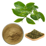 Anti-Oxidiant Plant Extract Tea Polyphenols 98% Catechins 80% EGCG 50% Green Tea Extract
