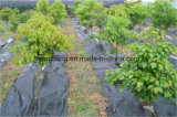 Black PP Woven Fabric for Weed Control Matting