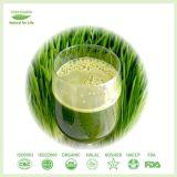 High Quality Barley Grass Juice Powder
