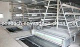 Nice Design & Price & Quality Automatic Chicken Poultry Cage Farm Equipment (A Type Frame)
