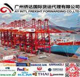 Shipping Container to Long Beach From Guangzhou/Shenzhen/Ningbo/Shanghai