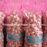 Professional Supplier Chinese Fresh Normal White Garlic