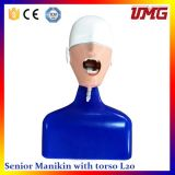 High Quality Cheap Medical Equipment Dental Practice Model