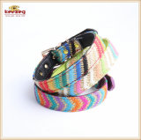 Special Colour Stripe Pet Products /Dog Cat Collar Kc0170