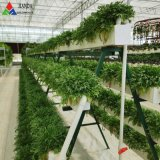 Agricultural Vegetable Tunnel Multi-Span Plastic/Polycarbonate Sheet PC/Glass/Greenhouse for Farming /Vegetables/Flowers/Tomato/Aquaponic/Sightseeing/Hydroponic