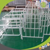 Hot DIP Galvanized Pig Gestation Stall for Sales