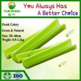 Organic Green Vegetables Wholesale Fresh Celery Price