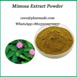 Buy Factory Supply Natural Plant Mimosa Extract Powder Online