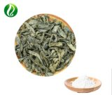 Factory Supply Ampelopsis Grossedentata / Vine Tea Extract Powder Dihydromyricetin 98%