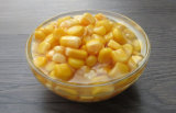 800g Canned Golden Sweet Kernel Corn with Best Price