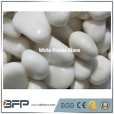China Factory Pure White Pebble Stone for Paving