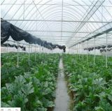 PC Sheet Hydroponic Systems Green House for Tomato