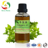 CAS No. 8007-11-2 Manufacturer Oregano Oil 70% Carvacrol/Origanum Oil Cretic/Spanish Oregano From Thymus Capitatus Price