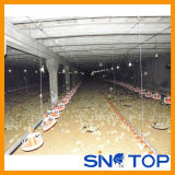 Poultry Farm Equipment Hot Sale in China