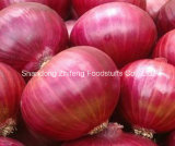 High Quality Fresh 5-7cm Red Onion