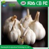 Wholesale Garlic Buyers and Fresh Normal White Garlic
