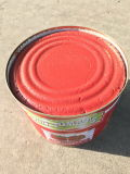 Canned Tomato Paste in Canned Food