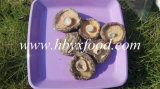 Agricultural Green Food 2-5.5cm Brown Dried Smooth Shiitake Mushroom Whole Price