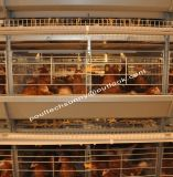 Best Price H Type Layer Cage Poultry Farm Hen Cages Cold Galvanized or Hot-DIP Galvanized