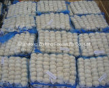 High Quality Fresh White Garlic
