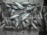 Japanese Jack Mackerel