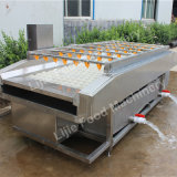 Practical Citrus /Orange Cleaning/Fruit Washing Machine with Favorable Price