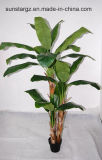 Banana Tree W/3 Trunks & 25lvs Potted for Hotel Decoration (50046)
