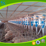 Farming High Quality Automatic Pig Feeding System