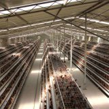 Good Price Automatic Poultry Farm Equipment Layer Chicken Battery Cage