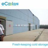 Large Cold Storage for Vegetables /Fruits Processing and Fresh Keeping