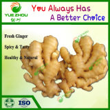 2019 Fresh Vegetable with Chinese Fresh Ginger with Grade a Quality
