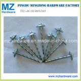 Elctro Galvanized Screw Shank Umbrella Head Roofing Nail