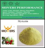 Supply High Quality Natural Extract Myricetin 98%