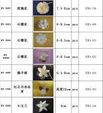 Dry Sola Flower Diffuser, Decorative Plant